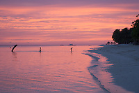 Bohol Beach The  Phillippines