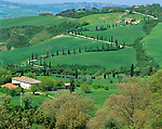 Tuscany, Italy      <br /> Curving road lined with cypress trees at LaFoce, in the hills near the hilltown of Montepulciano in the Val d'Orcia