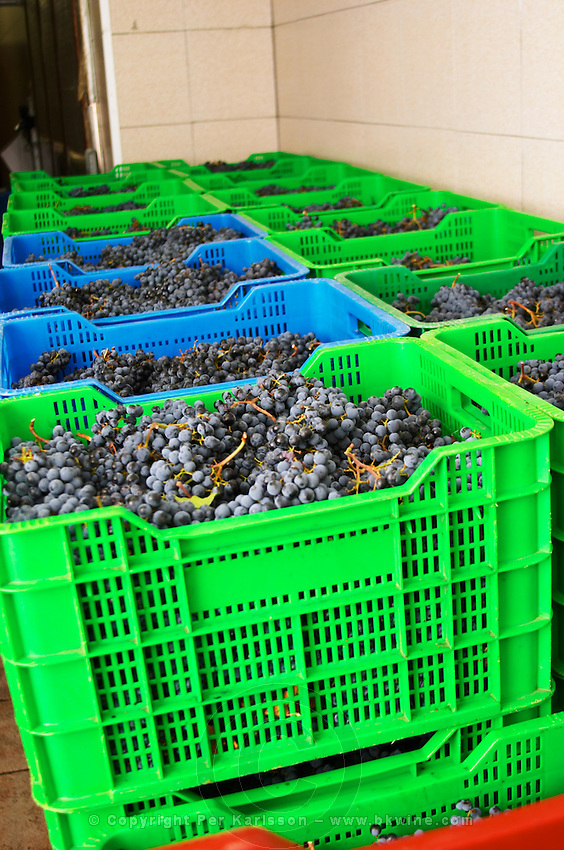 Grape reception at harvest. Cabernet Sauvignon. Clos de l'Obac, Costers del Siurana, Gratallops, Priorato, Catalonia, Spain.