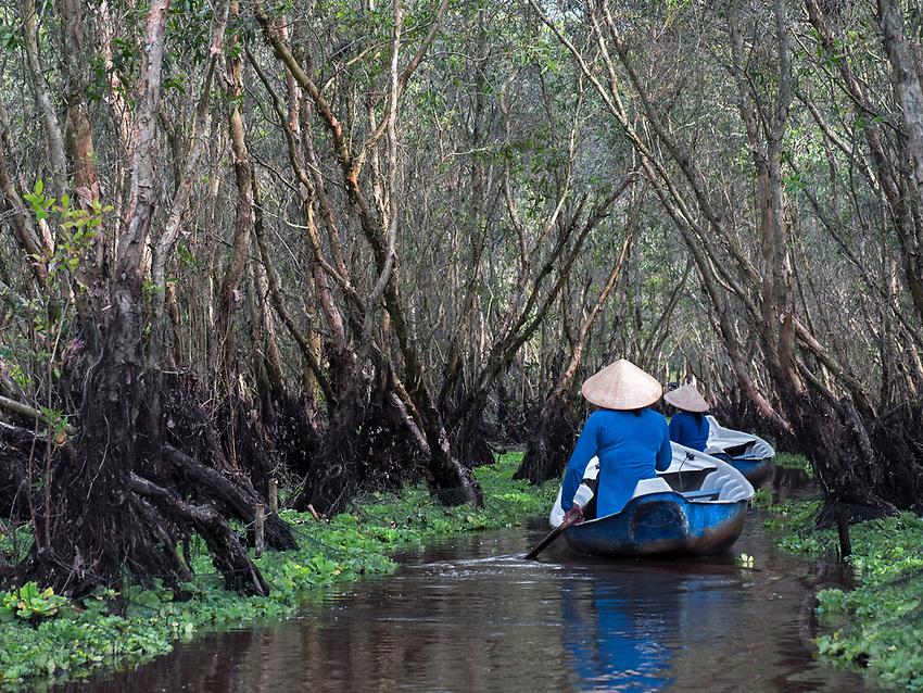 Forrest swamp in Chau Doc, Vietnam
