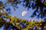 Morning moonset through the trees . ©2016. Jim Bryant. All Rights Reserved.