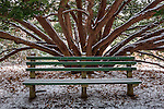 Snowy bench at the Arnold Arboretum in the Jamaica Plain neighborhood, Boston, Massachusetts, USA