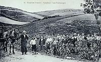 Europe/France/89/Yonne/AOC Chablis: Carte postale ancienne Groupe devendangeurs