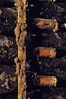 Europe/France/Bourgogne/21/Côte d'Or/Nuits Saint Georges: Les caves de la maison Charles Vienot - Détail de vieilles bouteilles AOC Vosne Romanée