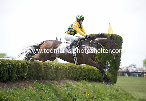 The Whacker and Paddy Young take a brush fence en route to victory in the Steeplethon at Great Meadow in the Spring.