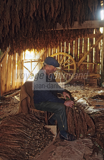 Europe/France/Midi-Pyrénées/46/Lot/Vallée du Lot/Cahors : Triage des feuilles de tabac sur le causse<br /> PHOTO D'ARCHIVES // ARCHIVAL IMAGES<br /> FRANCE 1990