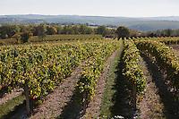 Europe/Europe/France/Midi-Pyrénées/46/Rocamadour: Vignoble d'Odile Arcoutel et Stephanie Salgues de la  Ferme des Campagnes.membres de la S.C.A. Les Vignerons de Roc-Amadour et productrices de  Vin de Roc-Amadour: L'Amadour