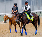 LOUISVILLE, KENTUCKY - MAY 01: Game Winner, trained by Bob Baffert, has the track to himself as he exercises in preparation for the Kentucky Derby at Churchill Downs in Louisville, Kentucky on May 1, 2019. John Voorhees/Eclipse Sportswire/CSM