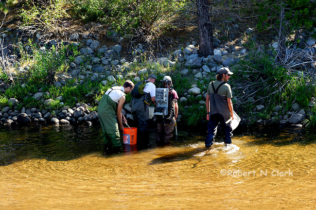 CalTrout fish rescue on the Truckee River
