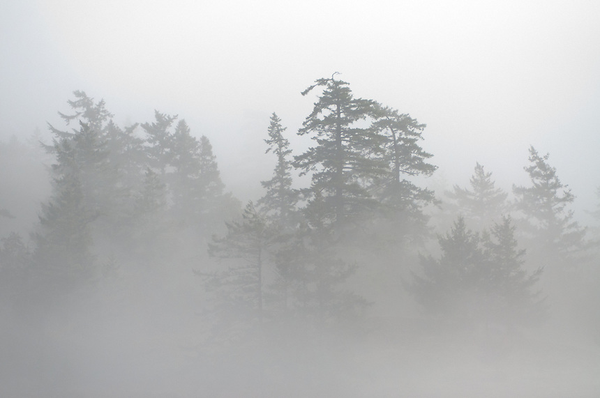 Trees Through the Fog, Stuart Island, Washington, US