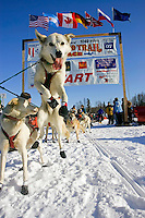 Perry Solomonson's dogs jumps in anticipation of leaving the start line at the re-start day of the 35th Iditarod sled dog race