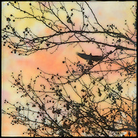 Encaustic painting art of bird through tree branches with berries in orange sky.