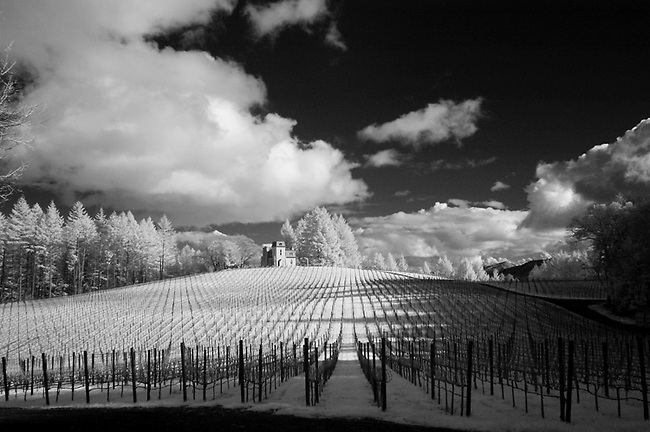 January photo of vineyard with green grass, rendered white with infra red camera.