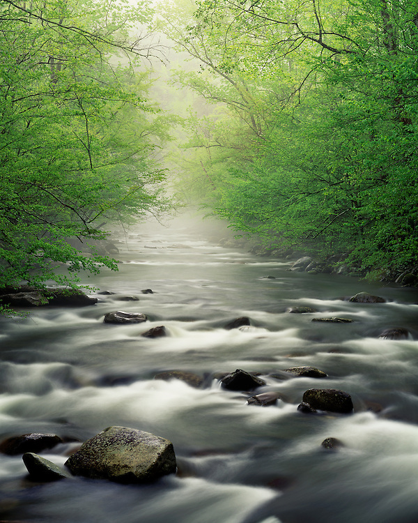 Foggy sunrise light on the Middle Prong of the Little River; Great Smoky Mountains National park, TN
