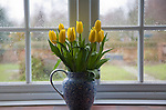 Vase of yellow tulips by window on wet day