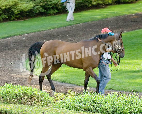 Ovour the Rainbow before The Dr. Sam Harrison Juvenile Arabian Stakes at Delaware Park on 7/2/11