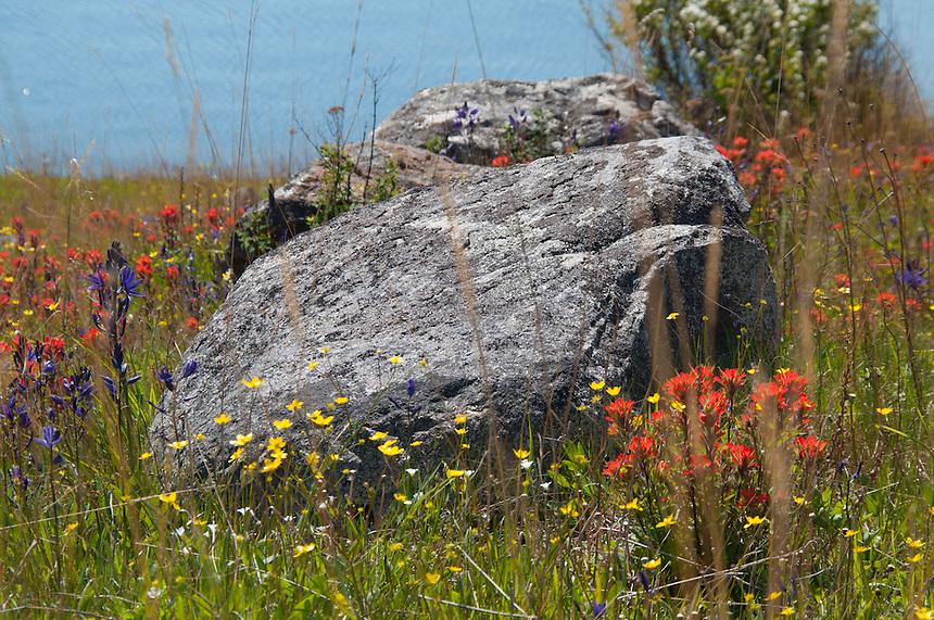Rock and Wildflowers  at Yellow Island, San Juan Islands, Washington, US