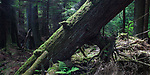Green Medicine - Forests of the Pacific Northwest