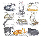 Kate, CUTE ANIMALS, LUSTIGE TIERE, ANIMALITOS DIVERTIDOS, paintings+++++New Breeds cats #,GBKM379,#ac#, EVERYDAY ,cat,cats