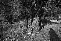 "MED Land 2017- Olive trees, Ionian Islands ""Dance with Mary"" exhibition selection"