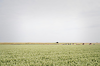 tiny peloton moving in typical Dutch open landscapes<br /> <br /> Ster ZLM Tour (2.1)<br /> Stage 2: Tholen &gt; Hoogerheide (186.8km)