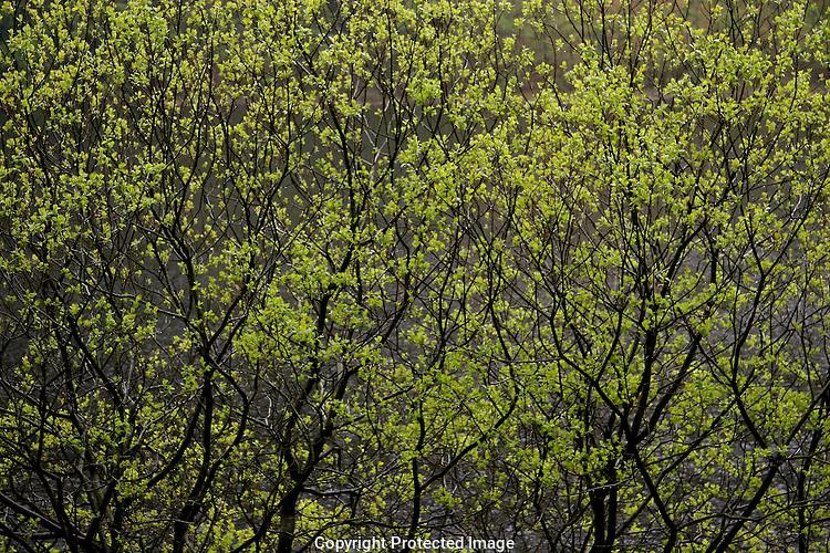 Upper Lake, Glendalough through the trees