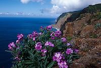 Portugal, Madeira, Küste bei Ponta do Pargo