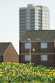 Daffodils in flower in front of mixed tenure housing in Stratford, London Borough of Newham.