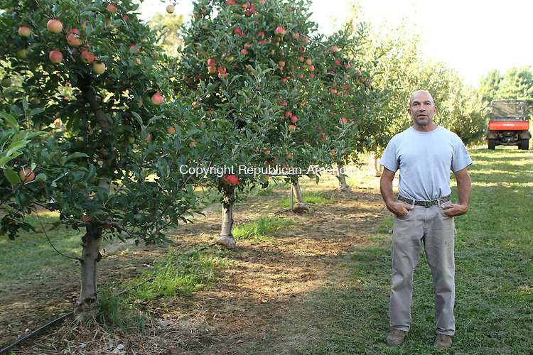 CHESHIRE, CT, 03 September 2014-090314LW03 - Eli Drazen, co-owner of Drazen Orchards in Cheshire, stands by a line of gala apple trees. Laraine Weschler Republican-American