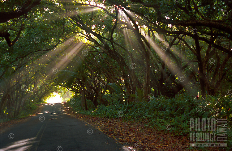 Scenic red road in Kau area, with sun streaking in through the trees