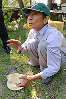 Beekeeper Masahiro Tominaga holds honeycomb from one of his hives, Inadani, Nagano Pref, Japan, September 24, 2011. Inadani is home to Japanese honey-bee farms. The bees feed off red-soba flowers and the exceptionally high-quality honey they produce is sold at a premium.