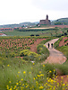 Biking among vineyards on the pilgrimage route to Santiago de Compostela, in the La Rioja region of Spain. Photo by Kevin J. Miyazaki/Redux