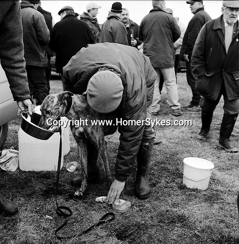 Hare Coursing...A trainer rubs down one of his greyhounds at the end of the Waterloo Cup. Near Altcar, Lancashire...Hunting with Hounds / Mansion Editions (isbn 0-9542233-1-4) copyright Homer Sykes. +44 (0) 20-8542-7083. < www.mansioneditions.com >..