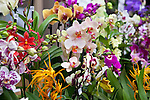 Display on the Laurence Hobbs Orchids Ltd stand at the RHS Orchid and Botanical Art Show 2013.
