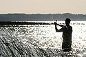 00416-029.01 Fishing: Wading angler is casting while fishing in bulrushes.  Bass, largemouth, lake, shoreline, weeds.