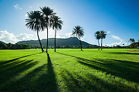 Morning light creates silhouettes of palm trees at Kapi'olani Regional Park and the more distant Diamond Head Crater, East Honolulu, O'ahu.