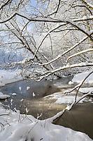 Bach im Winter, Schnee, Winterlandschaft, verschneite Äste, Winterstimmung, winterlich, eisig, Eis, kalt, Steinau, Tieflandbach, Schleswig-Holstein, Deutschland, Norddeutschland, snow