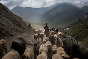 Shepherds seen with their flock along the Amarnath trekking route in Kashmir, India. Hindu pilgrims brave sub zero temperature and high latitude passes and make their pilgrimage to reach the sacred Amarnath cave, which houses a lingam - a stylized phallus, worshiped by Hindus as a symbol of God Shiva. Photo: Sanjit Das/Panos