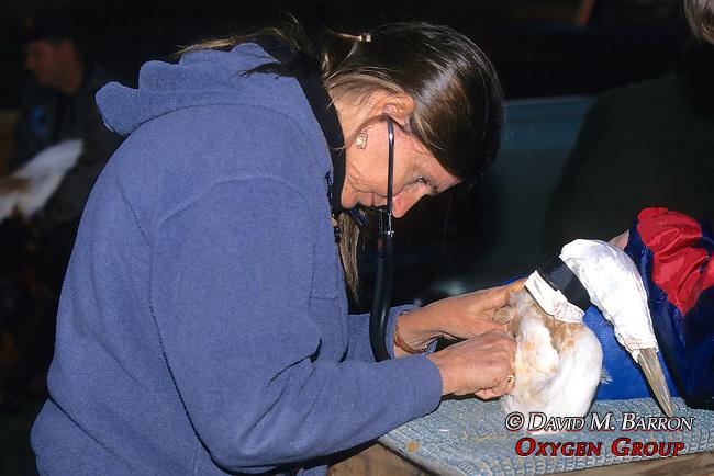 Marilyn Spalding Checking Whooping Crane