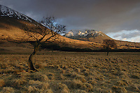 Beinn an Dothaidh, Bridge of Orchy, Argyll &amp; Bute, Southern Highlands<br /> <br /> Copyright www.scottishhorizons.co.uk/Keith Fergus 2011 All Rights Reserved