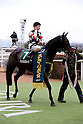 Horse Racing : Kisaragi Sho (NHK Sho) 2017