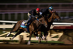 OCT 25: .Encoder works under Juan Leyva at Santa Anita Park in Arcadia, California on Oct 25, 2019. Evers/Eclipse Sportswire/Breeders' Cup