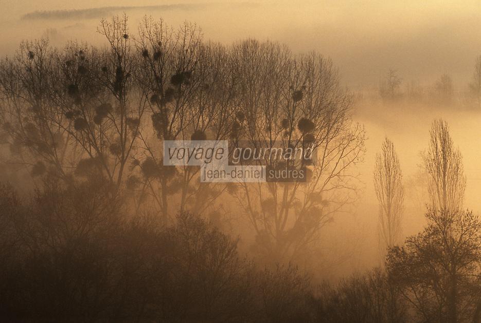 Europe/France/Pays de la Loire/49/Maine-et-Loire/Anjou: Coulée de Serrant - Brumes sur le Val de Loire - AOC Savennières