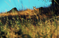 Deer at Santa Margarita Lake, California<br />