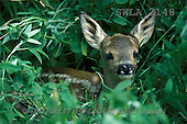 Carl, ANIMALS, wildlife, photos(SWLA2148,#A#)