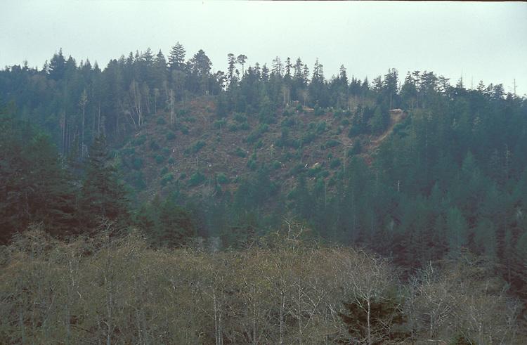 A hill that has been Clear Cut, Big River, Mendocino California