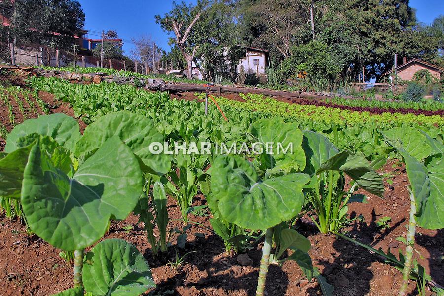 Horta organica em Santana de Parnaiba. Sao Paulo. 2016. Foto de Marcia Minillo.