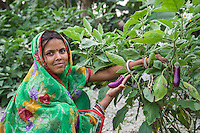 Vegetable farmer Sawan Kumari, a member of a Farmer's Producer Group, tends to her brinjal (eggplant) plants in her farm in Machahi village, Muzaffarpur, Bihar, India on October 26th, 2016. Non-profit organisation Technoserve works with women vegetable farmers in Muzaffarpur, providing technical support in forward linkage, streamlining their business models and linking them directly to an international market through Electronic Trading Platforms. Photograph by Suzanne Lee for Technoserve