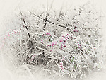 Frozen, ice glazed branches and pink berries of a shrub. Abstract sepia toned fall nature scenery.