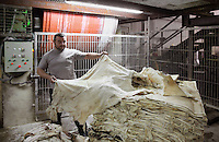 Nacho looking at the raw skins just arrived at the tannery factory of Scriptorium SL in Valencia, Spain. Picture by Manuel Cohen
